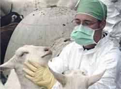 دامپزشک - مسیر ایرانی