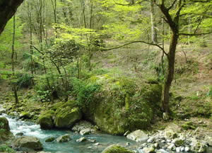 جنگل بان - مسسیر ایرانی